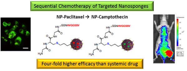 Sequentail Chemotherapy of Targeted Nanosponges
